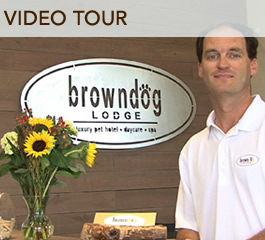 BROWNDOG VIDEO
